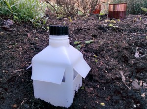 Slug trap installed in the herb garden